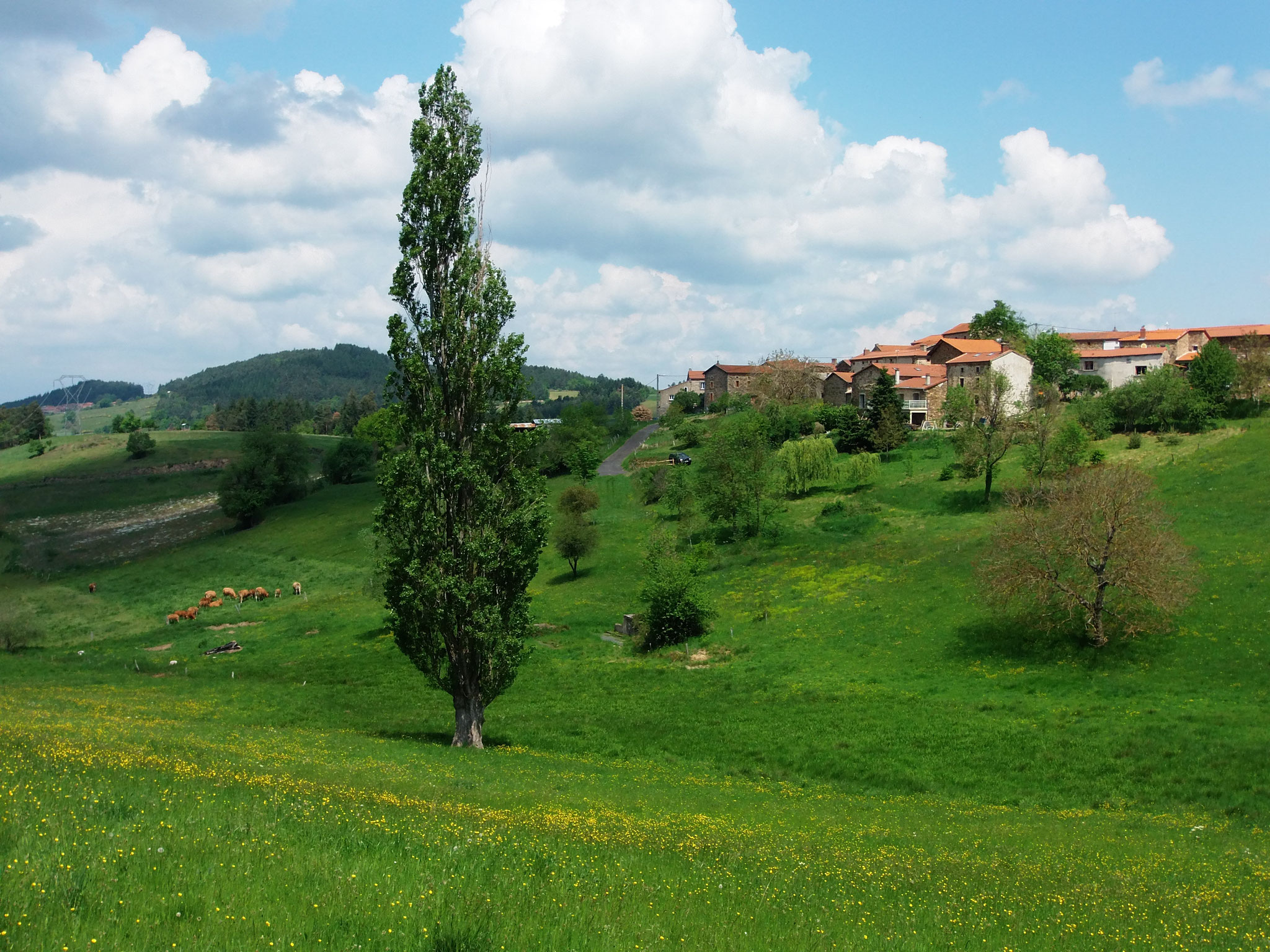 GreenGo - Le Vallon d'Armandine 31
